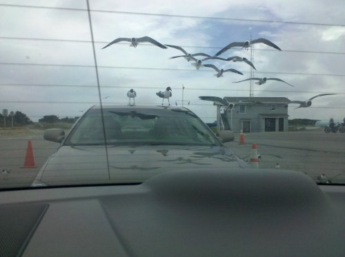 Images of birds hovering around a car